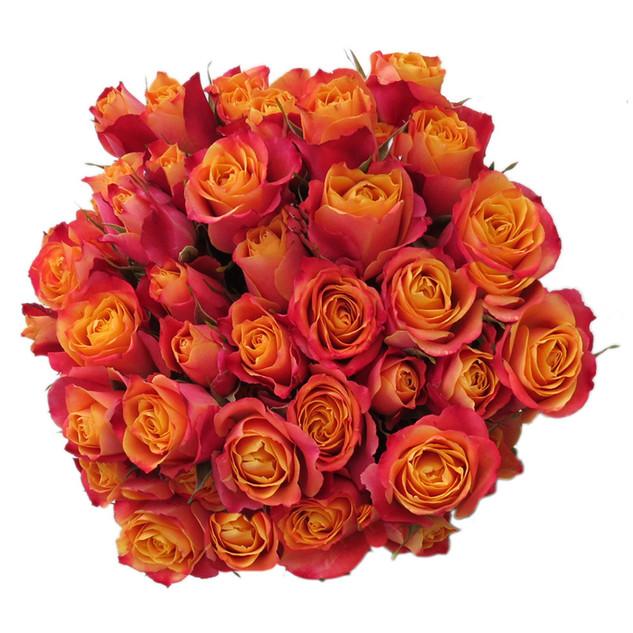 Spray Rose Sonora