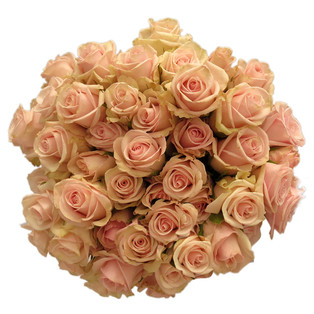 Spray Rose Royal Porcelana