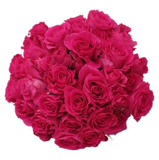 Spray Rose Super Nova