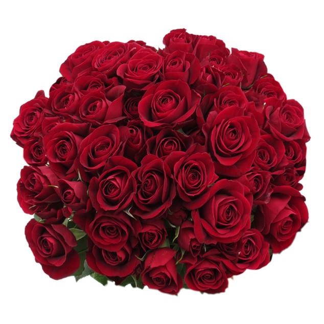 Spray Rose Rubicon