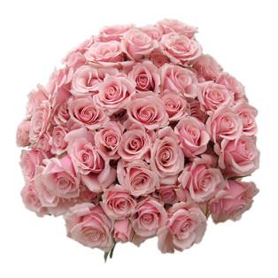 Spray Rose Majolika