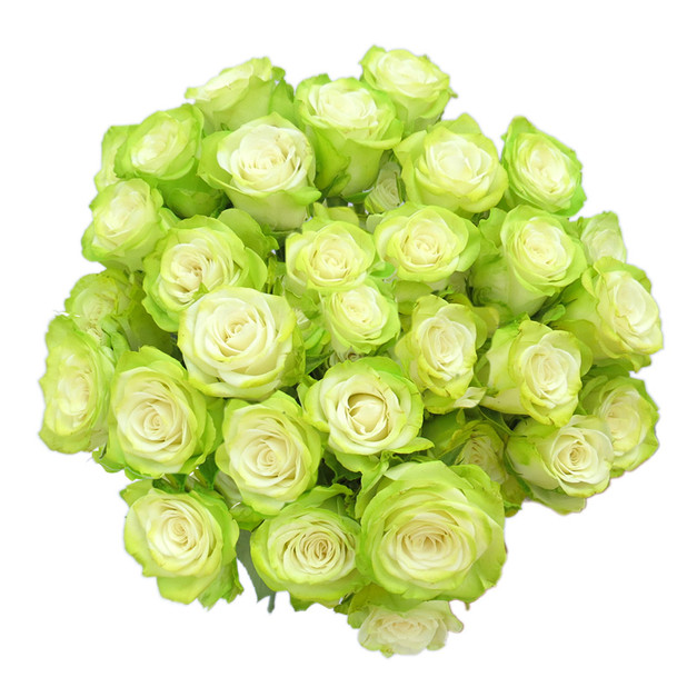 Spray Rose Light Green Illusion