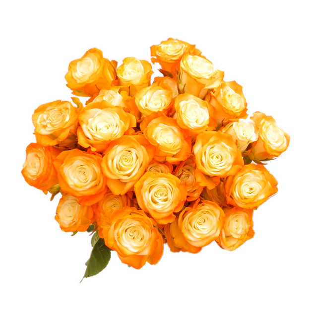 Spray Rose Orange Illusion