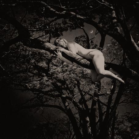 Mulheres - Árvores
