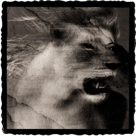 Seja como um leão