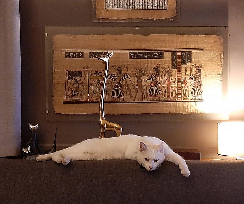 Current cat - White