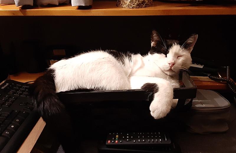 Current cat - Mestan