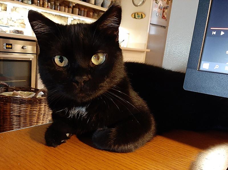Current cat - Karafatma