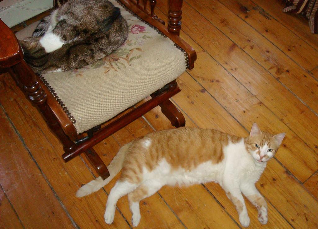 Demised cats - Bahriye on the rocker, Temel on the floor