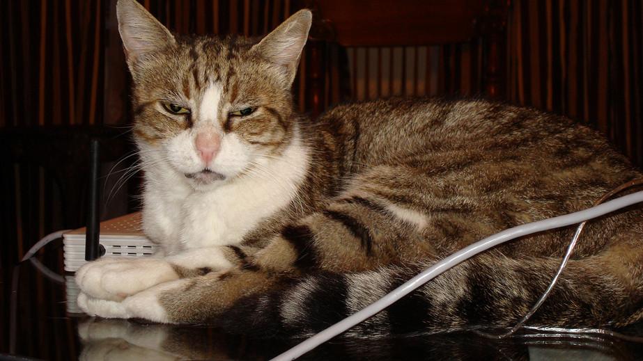 Demised cat - Bahriye