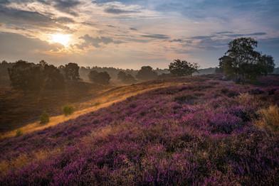 H-Lüneburger Heide-Sonne_C-Pixabay.jpg