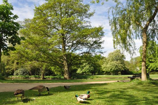 Spaziergang Kurpark Lüneburg