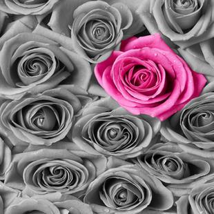 single pink flower.jpg