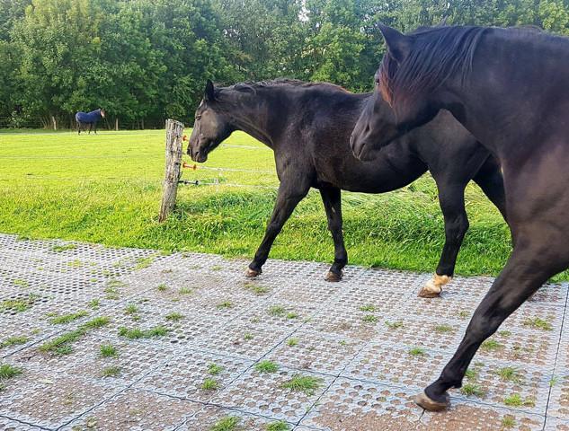 Horses walking on grids