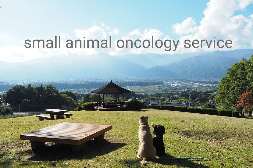 犬猫 腫瘍診療 トップ