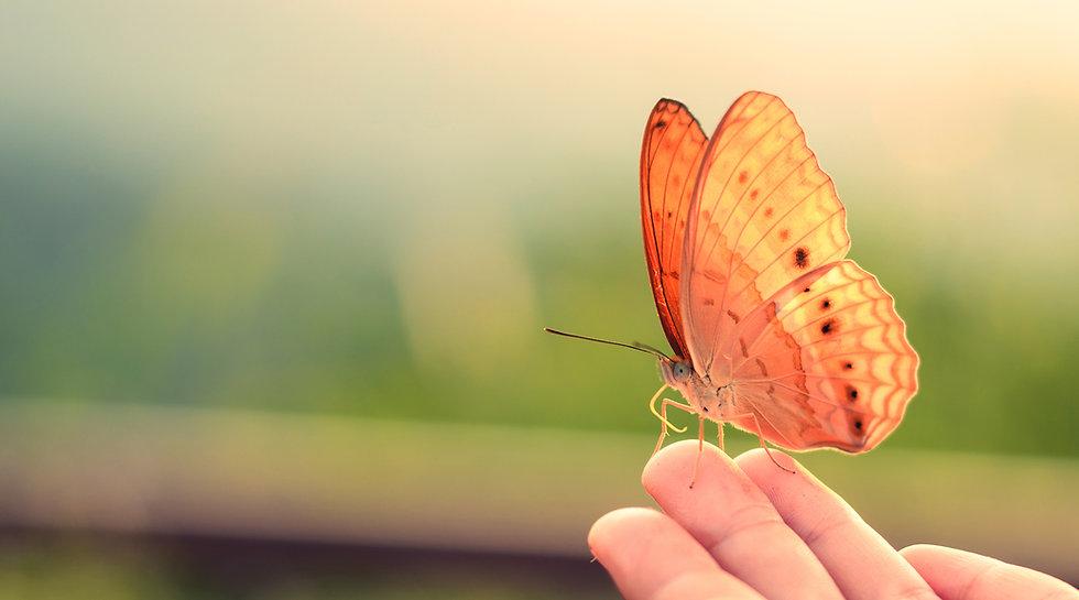 Leadership transformation, Transformation, Coaching