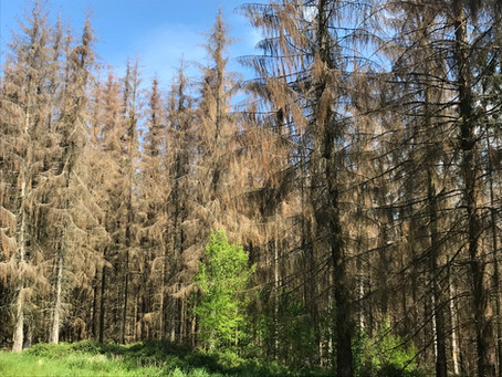 Toter Wald - Tote Jagd?
