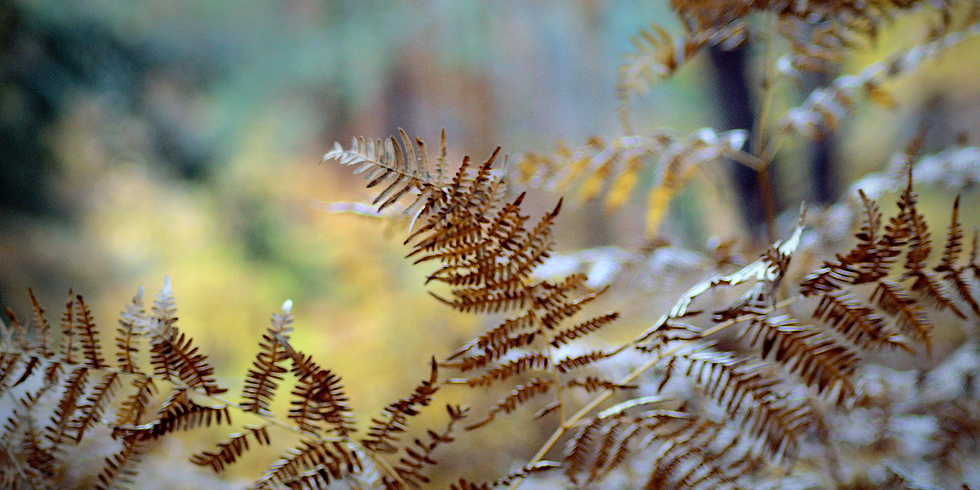Herbstliche Drückjagd im Stadtwald Landau – Godramstein