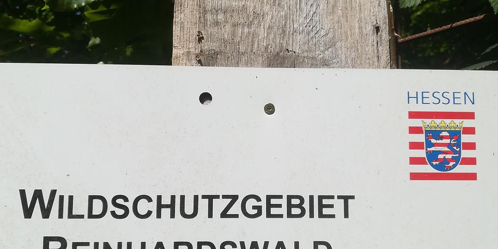 Auftragsjagd im Reinhardswald