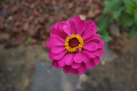 Flower: Jodedech