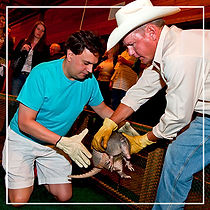 Armadillo-Racing-for-Corporate-Dinners-a