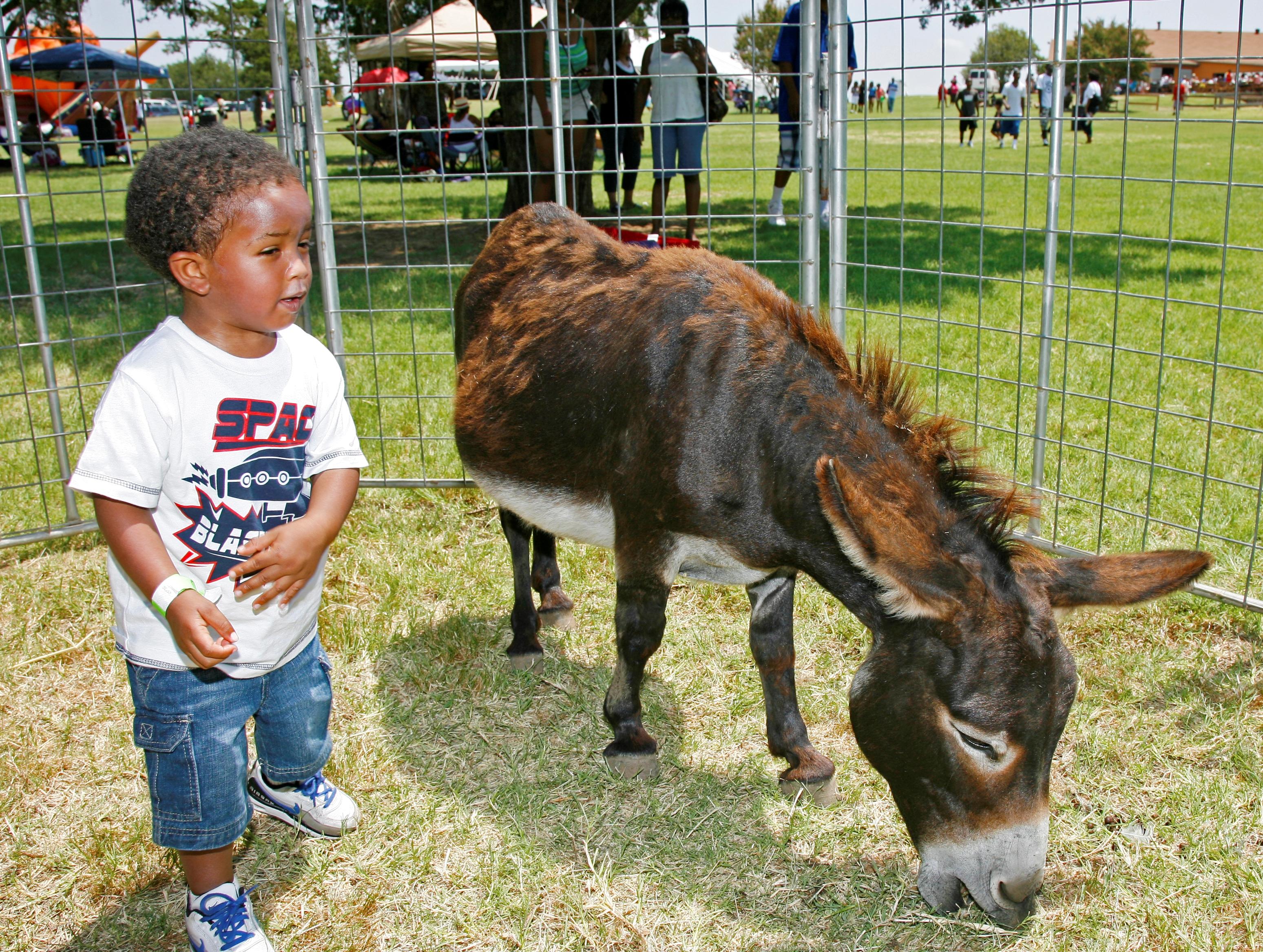 Petting Zoo  for Company Picnic at Circl