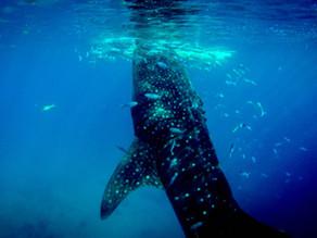 Die Kraft des Meeres - Ozeane spenden Leben