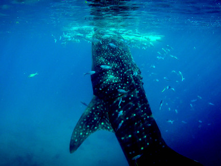 Short Story: Charlene Versus the Church of the Land Whale