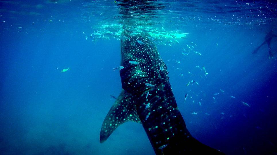 Creature subacquee