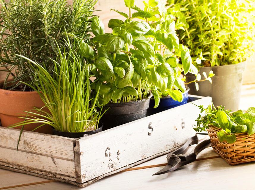 herbs.1