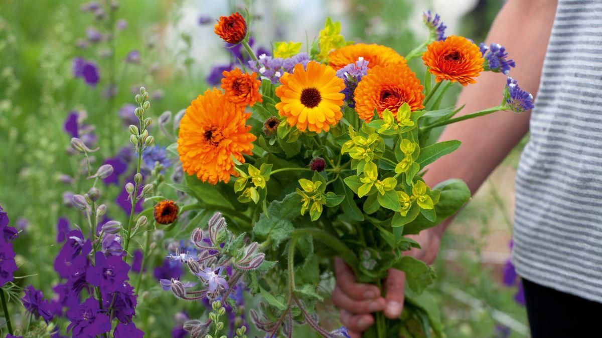 flowers.cut