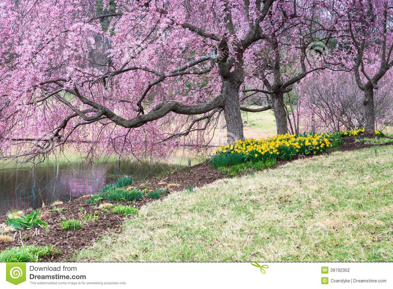 spring.1