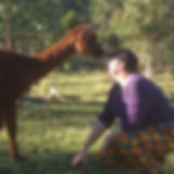 Portrait of Nat communing with an alpaca