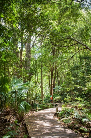 Minnamurra Rainforest Kiss Chasey 2012