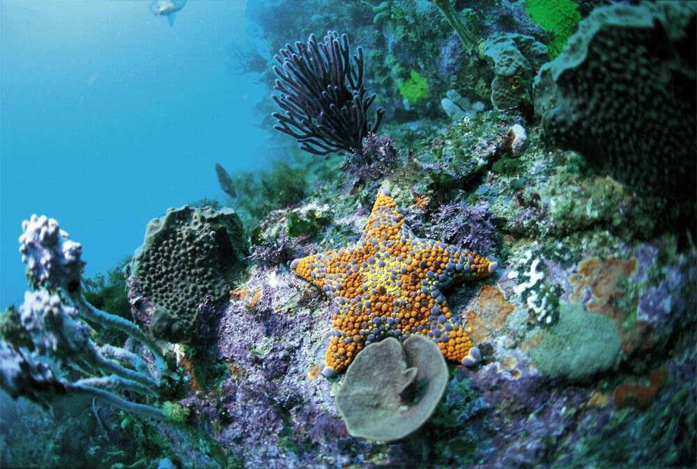 snorkelling-south-coast