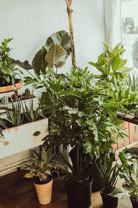 Bombadil Plants