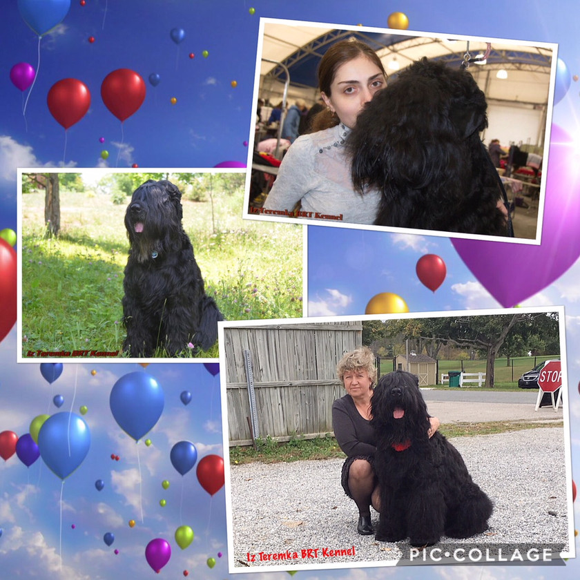 """Happy Birthday montage of different photos of """"E"""" litter"""
