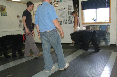 Obedience Training
