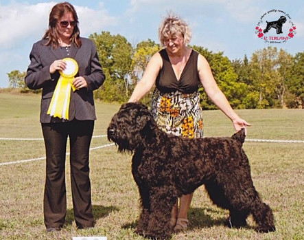 All Breed International Dog Show