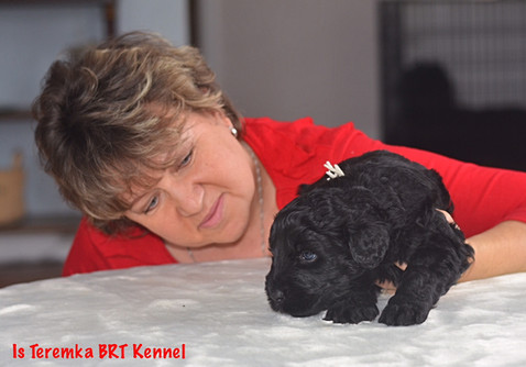 Lana looking after a Black Russian Terrier puppy Fima