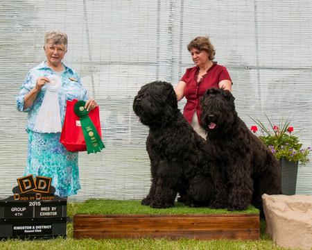 Kingston and District Kennel Club 2015