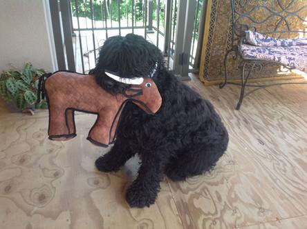 Lari and his pet horse