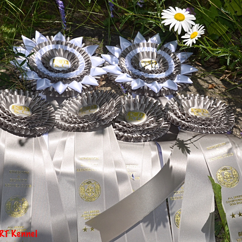 Ribbons won by Blitzen displayed on a table