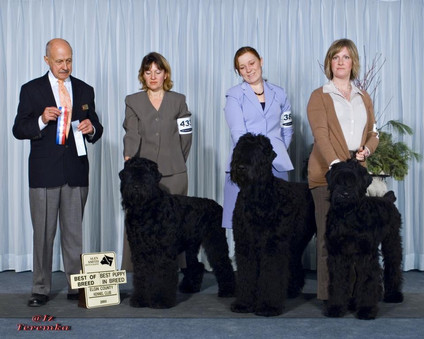 Elgin County Kennel club 2006