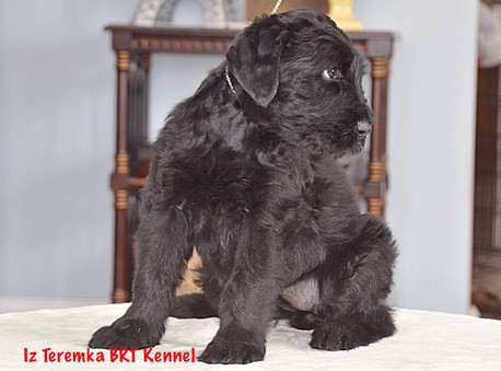 Fima at 7 weeks old