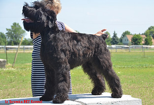 Fima being stacked by her handler Lana, Sarnia ON Canada