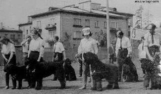 Military Black Russian Terrier