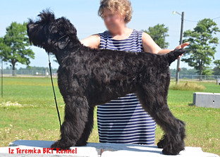 Side view of Fima being stacked by her handler Lana, Sarnia ON Canada