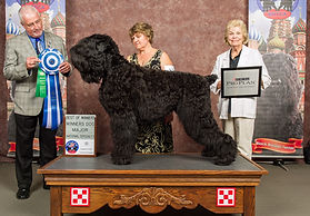 MultiCh. Eremey Son Lari Iz Teremka, aka Blitzen. Best of Winners at BRTCA specialty 2015.
