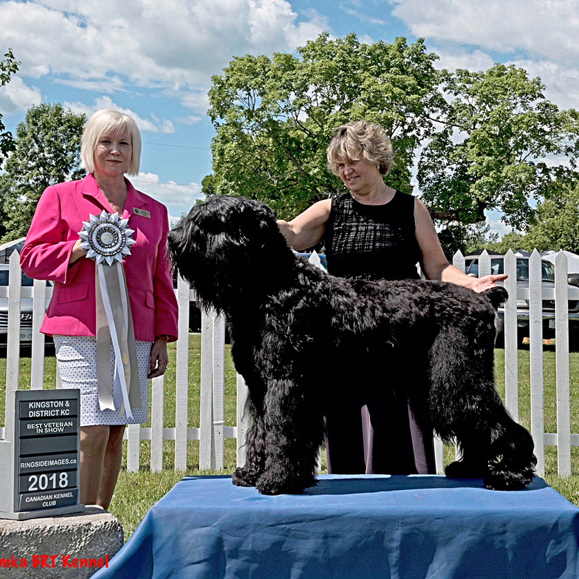 Best Veteran In Show Ribbon 2018 being shown by judge (l) and Blitzen in a stacked position together with his handler Lana